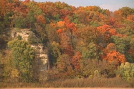 beautiful autumn display of hard maples against a limestone bluff