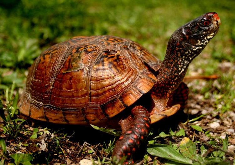 how to keep box turtles warm in winter