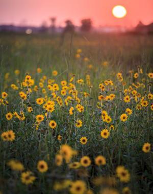 Tucker Prairie sunset