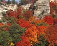 beautiful display of hard maples against a limestone bluff