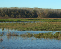 wetlands at fountain grove conservation area