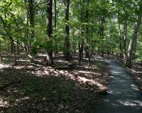Paved path at Rockwoods Reservation