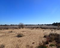 A sandy prairie with tufts of grasses at Sand Prairie CA