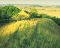 Grassy hill at Star School Hill Prairie CA