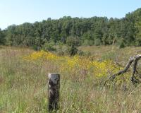 Field at Wildcat Glade NA