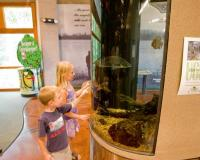 children looking at a large fish tank