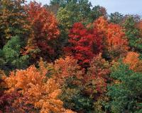 Autumn woods showing a patchwork of different colors