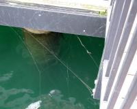 Photo of a longjawed orbweaver web attached in the corner of a dock above water