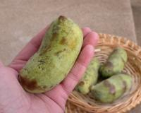 Photo of pawpaw fruit held in a hand, with more in a basket in the background.