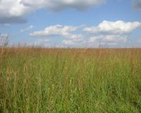 Photo of Friendly Prairie, showing grassland, blue sky, and silvery clouds