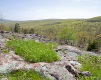 Photo of an igneous glade at Taum Sauk Mountain in springtime, with view to distance