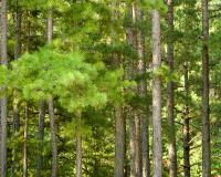 photo of Houf Pine Forest