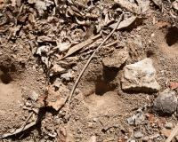 Photo of antlion pits in dusty ground