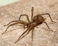 Photo of a grass spider