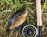Fishing for Bluegill