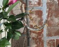 A large gray female and smaller yellow walking stick mate while hanging from a tree branch in front of a red brick wall.