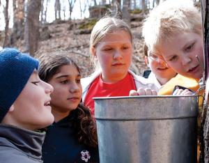 Five children look in a sap bucket on a maple tree.