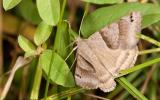 A photo of a Clover Looper.