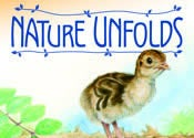 Nature Unfolds Cover showing a turkey chick